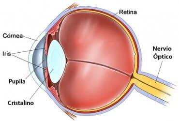 Presbícia anatomia ocular